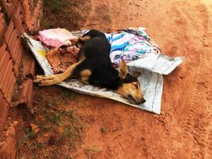 Mulher denúncia abandono de animal