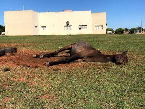 Cavalo morre após ficar dias abandonado