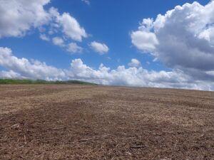 Pecuarista é autuado em R$ 57 mil por desmatamento ilegal