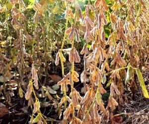 Cadastro de plantio de soja em Mato Grosso do Sul é encerrado com excelente resultado