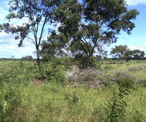 Fazendeiro é autuado em R$ 10,5 mil por desmatamento ilegal