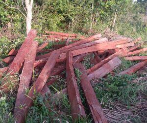 Proprietário rural é multado em R$ 9,5 mil por exploração ilegal de madeira
