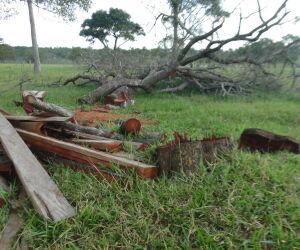 Pecuarista é multado em R$ 3,6 mil por derrubada ilegal de árvores