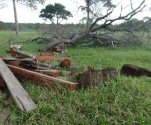 Idoso é multado em R$ 3, 6 mil por desmatamento