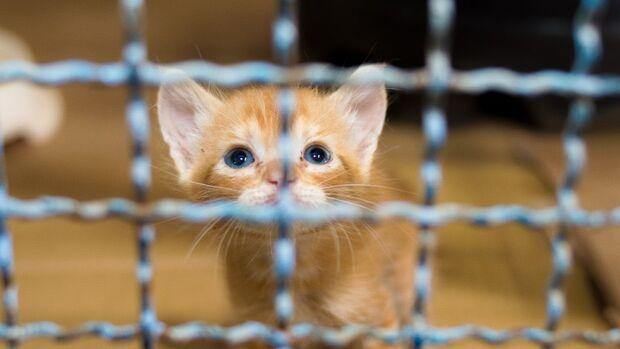 No feriadão, CCZ faz plantão para adoção de cães e gatos