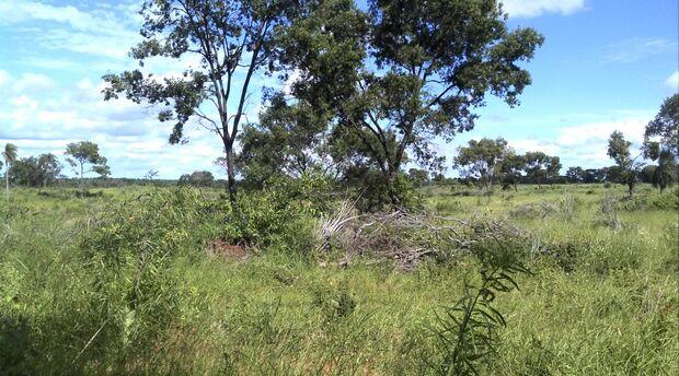 Fazendeiro é multado em R$ 10,5 mil por desmatamento ilegal