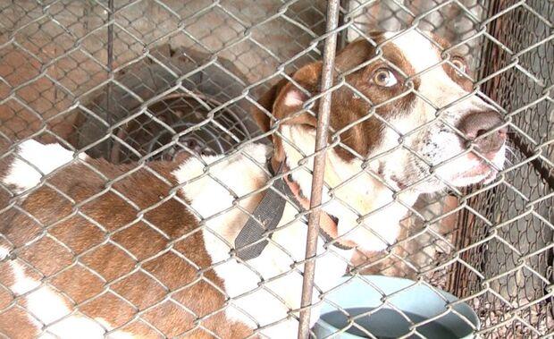 Jovem é multado em R$ 1mil por maus-tratos e abandono de cachorro