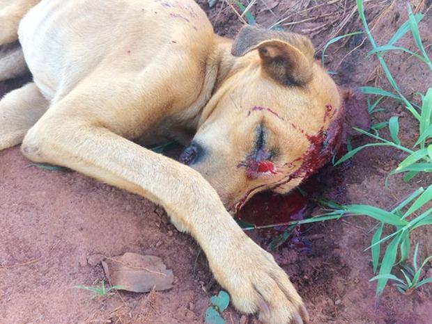 Dono que golpeou cachorro com enxada e arrastou animal é procurado pela polícia
