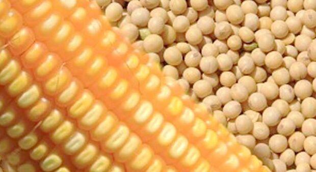 Capacidade de armazenamento de alimentos cai 0,6%, diz IBGE