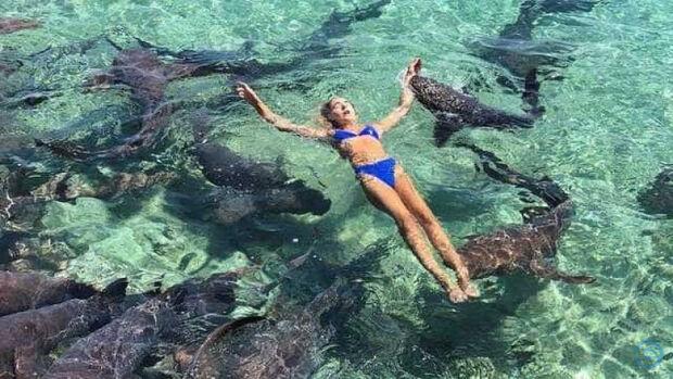 Jovem tenta tirar fotos com tubarões e é atacada