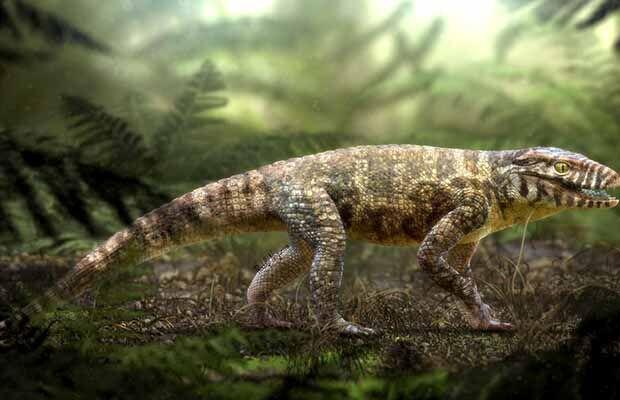 Fóssil de crocodilo encontrado no Triângulo Mineiro