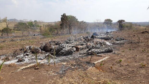 Fazendeiro é autuado em R$ 15 mil por exploração ilegal de madeira