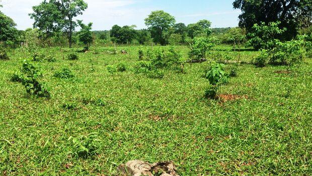 Proprietário rural é autuado por desmatamento ilegal de vegetação nativa