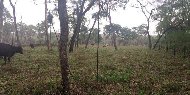 PMA autua três proprietários rurais por desmatamento ilegal
