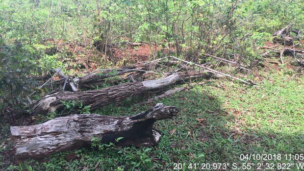 Campo-grandense é multado por desmatamento ilegal em sua propriedade em Terenos