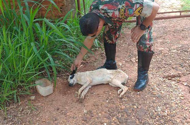 Homem é autuado por maus-tratos abandono de cachorro doente