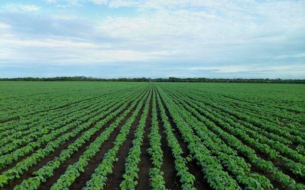 Entidades do agronegócio apresentam resultados do Soja Plus 2018