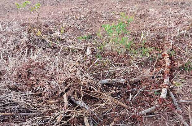 Pecuarista é multado em R$ 9 mil por desmatamento ilegal
