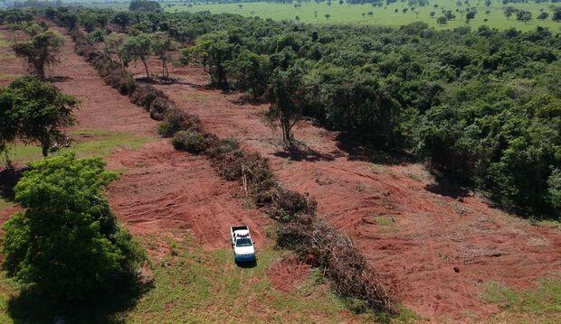 PMA multa pecuarista em R$ 38 mil por desmatamento ilegal